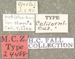Image of <i>Bactridium californicum</i> Fall 1917