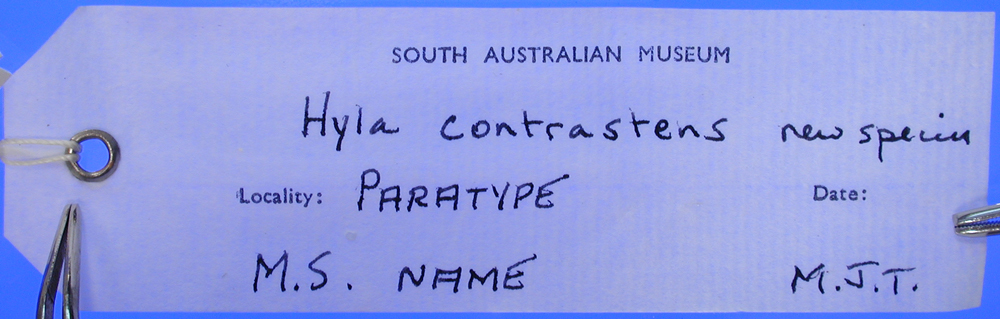 Image of <i>Litoria contrastens</i> (Tyler 1968)