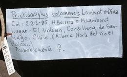 Image of <i>Pristidactylus volcanensis</i> Lamborot & Diaz 1987