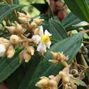 Image of snailwood