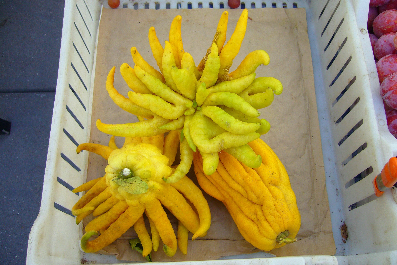 Image of <i>Citrus medica sarcodactylis</i>