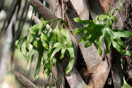 Image of hand fern