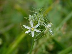 Image of Bushveld chink