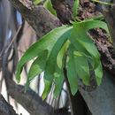 Image of hand fern