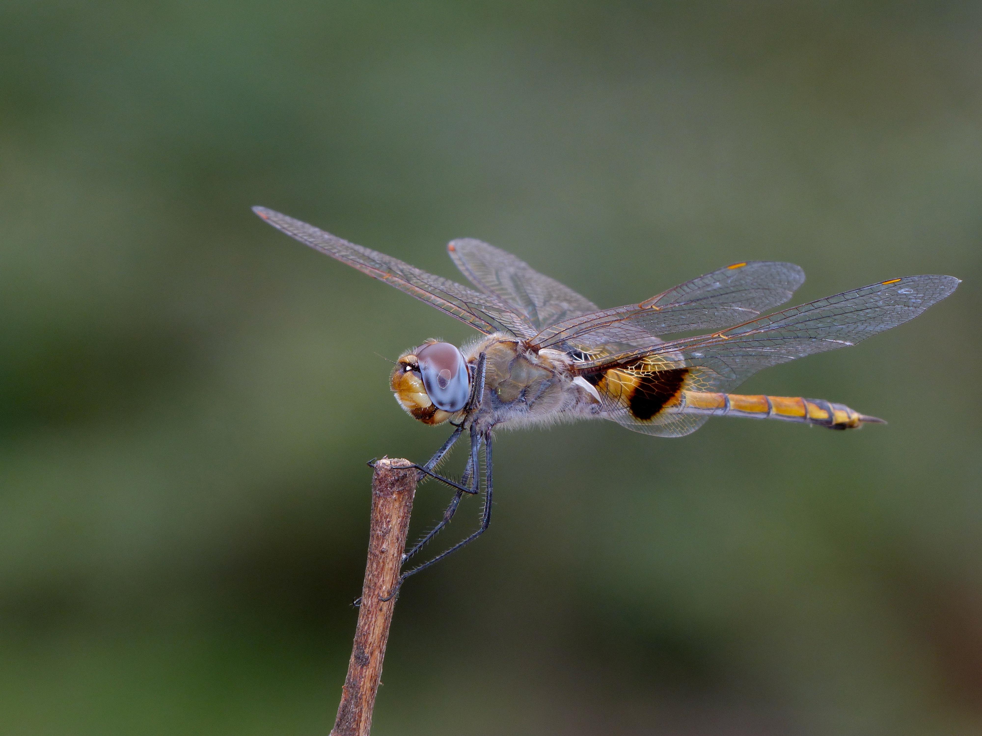 Image of Keyhole Glider