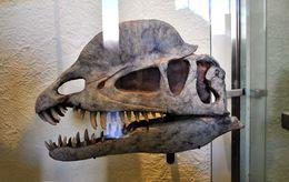 Image of <i>Dilophosaurus wetherilli</i> (Welles 1954)