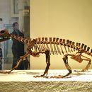 Image of <i>Trilophosaurus buettneri</i> Case 1928