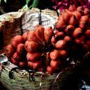 صورة <i>Salacca wallichiana</i> Mart.