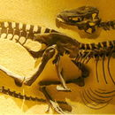 Image of <i>Gorgosaurus libratus</i> (Lambe 1914)