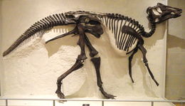 Image of <i>Prosaurolophus maximus</i> Brown 1916
