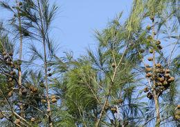 Image of forest-oak