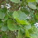 Image of Umwane