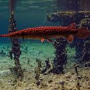 Image of gars
