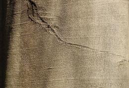 Image of Oriental Beech