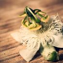 Image of white passionflower