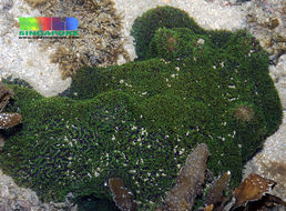 Image of spine coral
