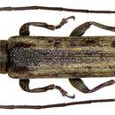 Image of <i>Dolichepilysta mindanaonis</i> Breuning 1966