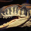 Image of <i>Carcharodontosaurus saharicus</i> (Depéret & Savornin 1925)