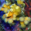 Image of tree coral