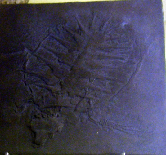 Image of <i>Glarichelys knorri</i>