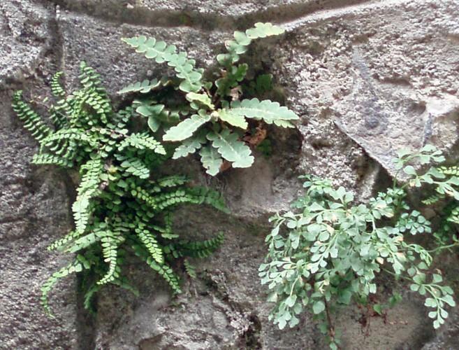 Sivun Seinäraunioinen kuva