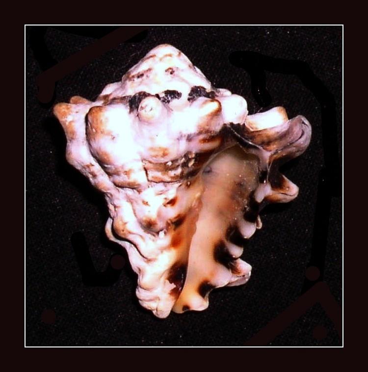 Image of top vase