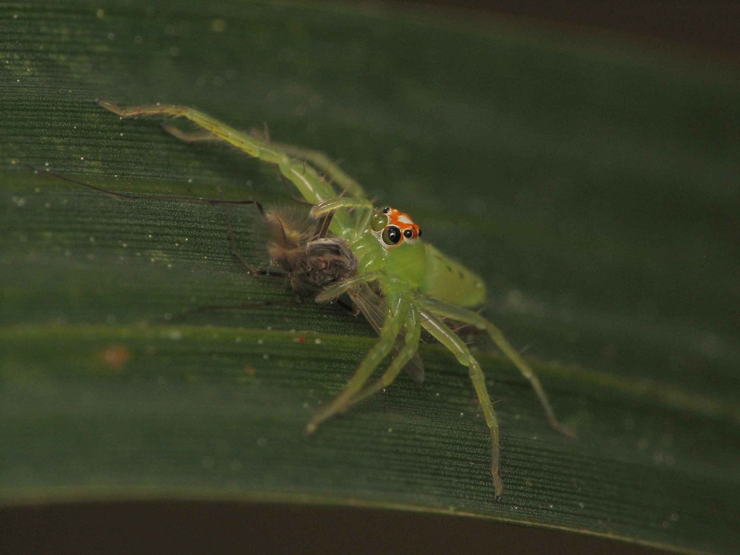 Image of Magnolia Green Jumper