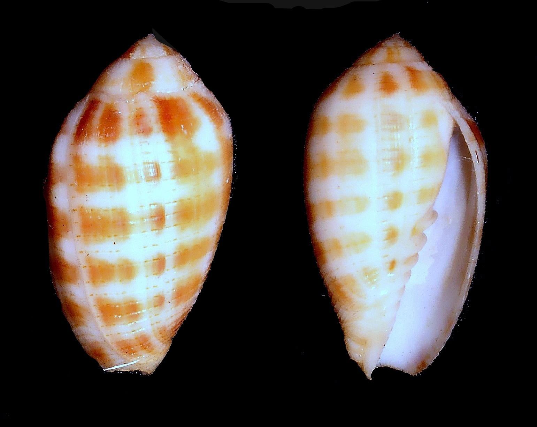 Image of finger miter