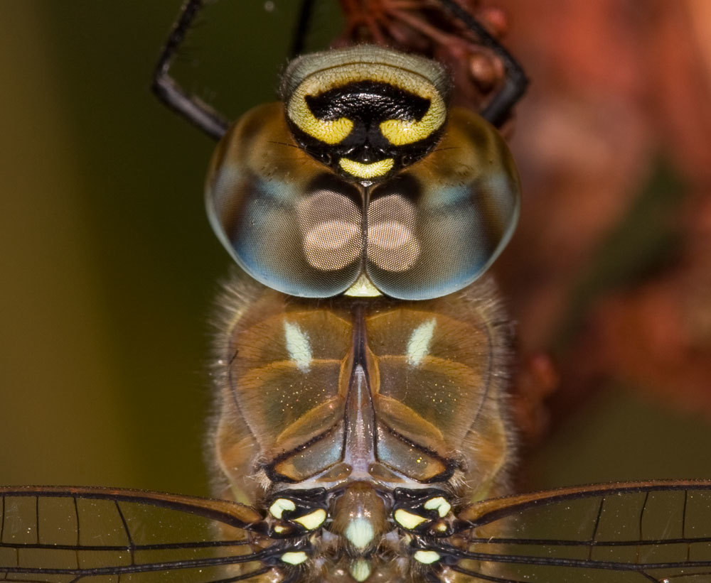 Image of Migrant Hawker