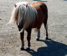 Image of Arabian