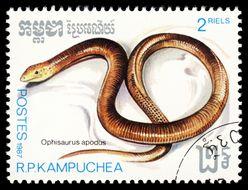 Image of Sheltopusik