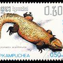 Image of Bell's Dabb Lizard