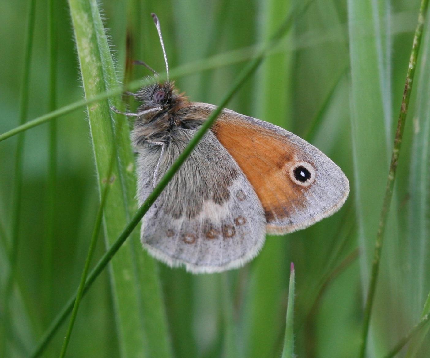 Image of Small Heath