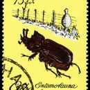 Image of <i>Homophileurus cubanus</i> Prell 1911