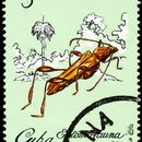 Image of <i>Odontocera josemartii</i> Zayas 1956