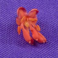 Image of <i>Dimorphandra polystachya</i>
