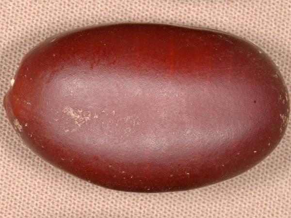 Image of <i>Hymenaea oblongifolia</i> Huber