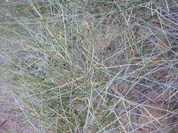 Image of Arizon Joint-fir