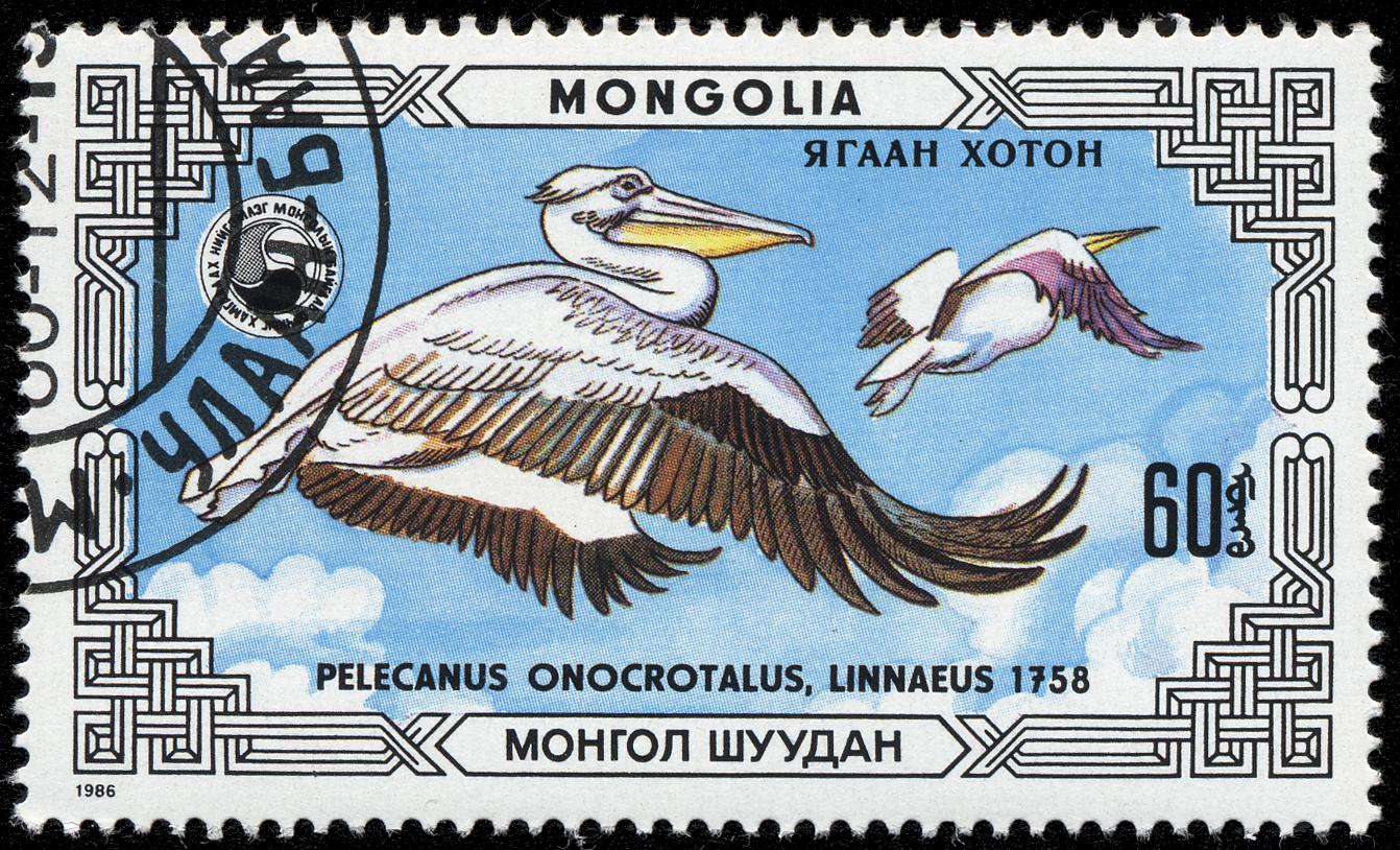 Image of Pelecanus