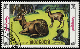 Image of musk deer
