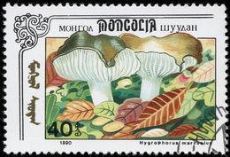 Image of <i>Hygrophorus marzuolus</i> (Fr.) Bres. 1893