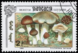 Image of <i>Tricholoma borgsjoeense</i> Jacobsson & Muskos 2006