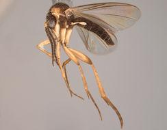 Image of <i>Azana malinamoena</i>