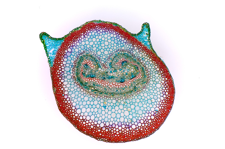 Image of Flowering fern