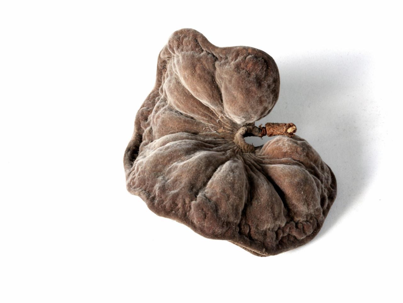 Image of <i>Enterolobium gummiferum</i> (Mart.) J. F. Macbr.