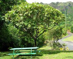 Image of Hawaii 'Ohe
