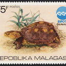 Image of Asian box turtle