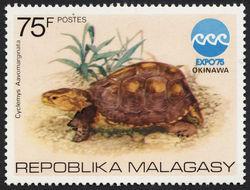 Image of Yellow-margined box turtle