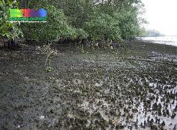 Image of Ocean turf grass