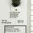 Image of <i>Deltochilum</i> (<i>Deltohyboma</i>) <i>peruanum</i> Paulian 1938